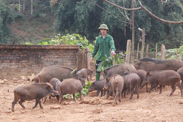 Xem ngày tốt chăn nuôi để vật nuôi mau lớn, mạnh khỏe